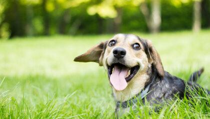 Animal Welfare Fund
